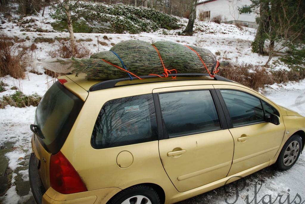 1 181212 Frakting av juletre