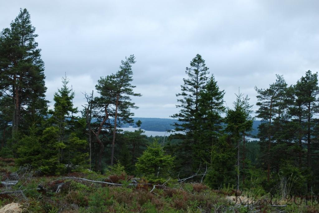 2 200513 Geocaching langs Ørveien