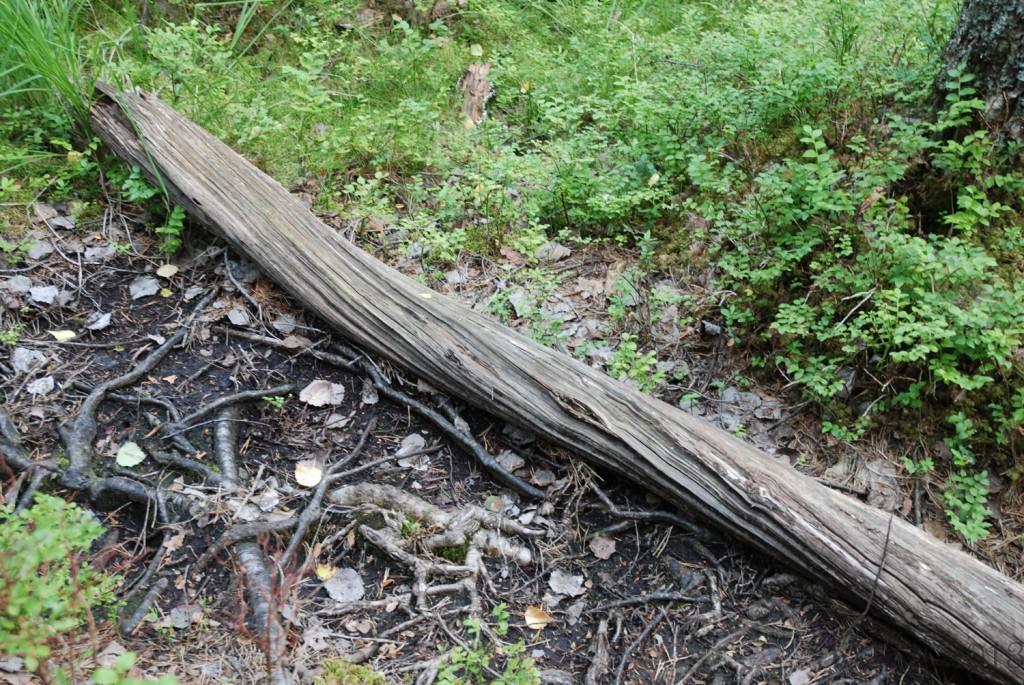 18 140713 Telttur i Tresticklans Nationalpark