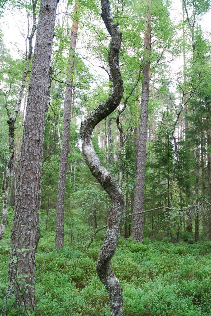20 140713 Telttur i Tresticklans Nationalpark