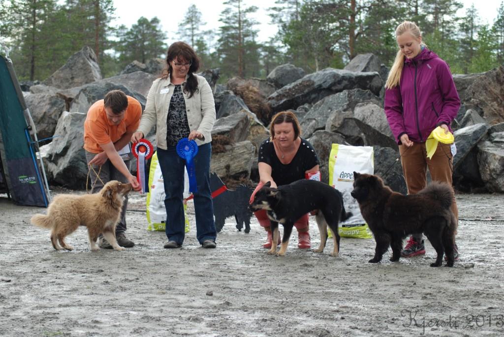 5 130813 100813 Lapphundspesialen på Lygna - Valp BIS1 Sisko Av Vintervidda BIS2 Obbolalägdan's Asti BIS3 Oahpalas Geallu