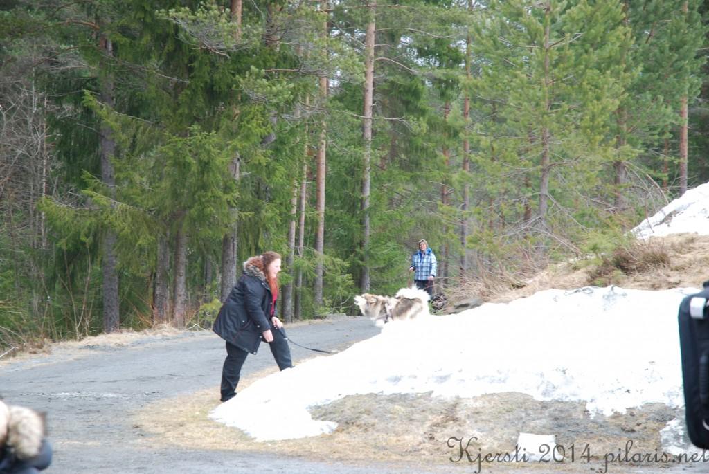 2 220314 Lapphundspesialen på Kongsberg - Marianne og Molly leker i snøen