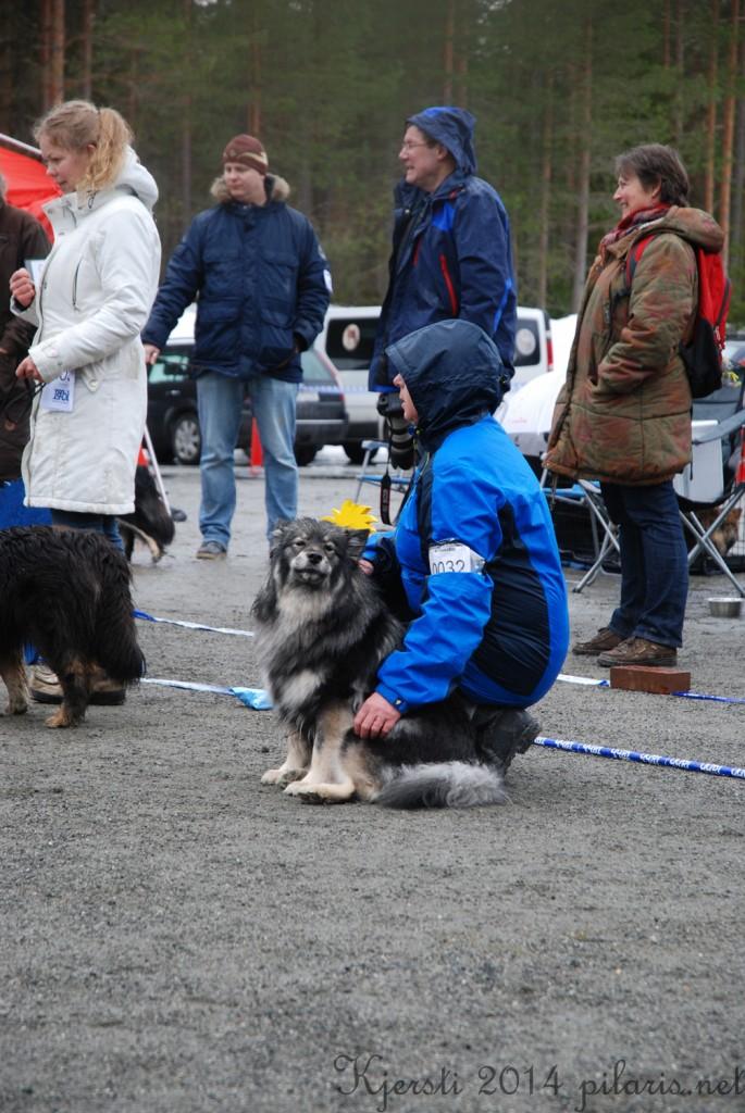 5 220314 Lapphundspesialen på Kongsberg - Lapinlumon Harmaasukka