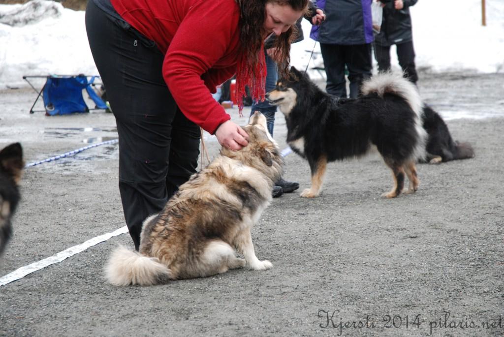 6 220314 Lapphundspesialen på Kongsberg - Marianne og Molly