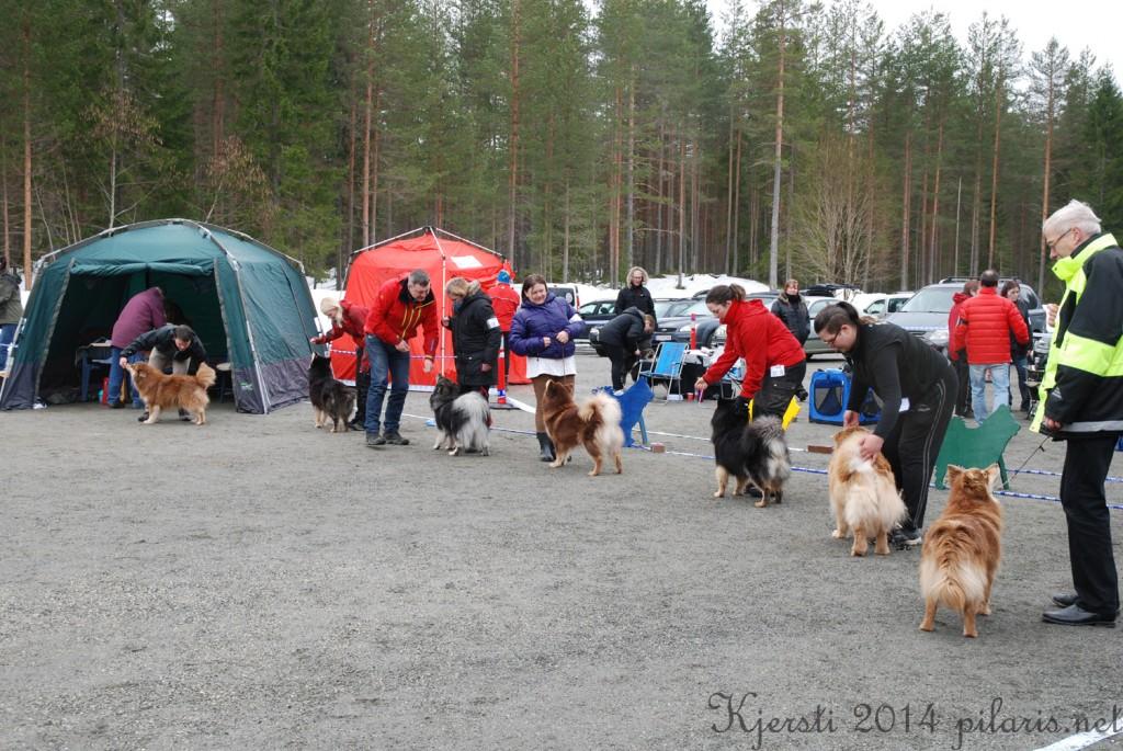 8 220314 Lapphundspesialen på Kongsberg - Beste tispeklasse