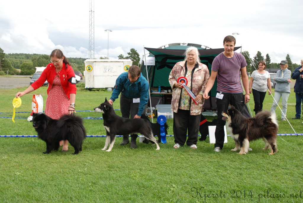 7 180814 170814 Lapphundspesialen i Aurskog - Lillmusties Liam, Arctic Soul Lapponian Kiehka og Ukkonen Av Vintervidda