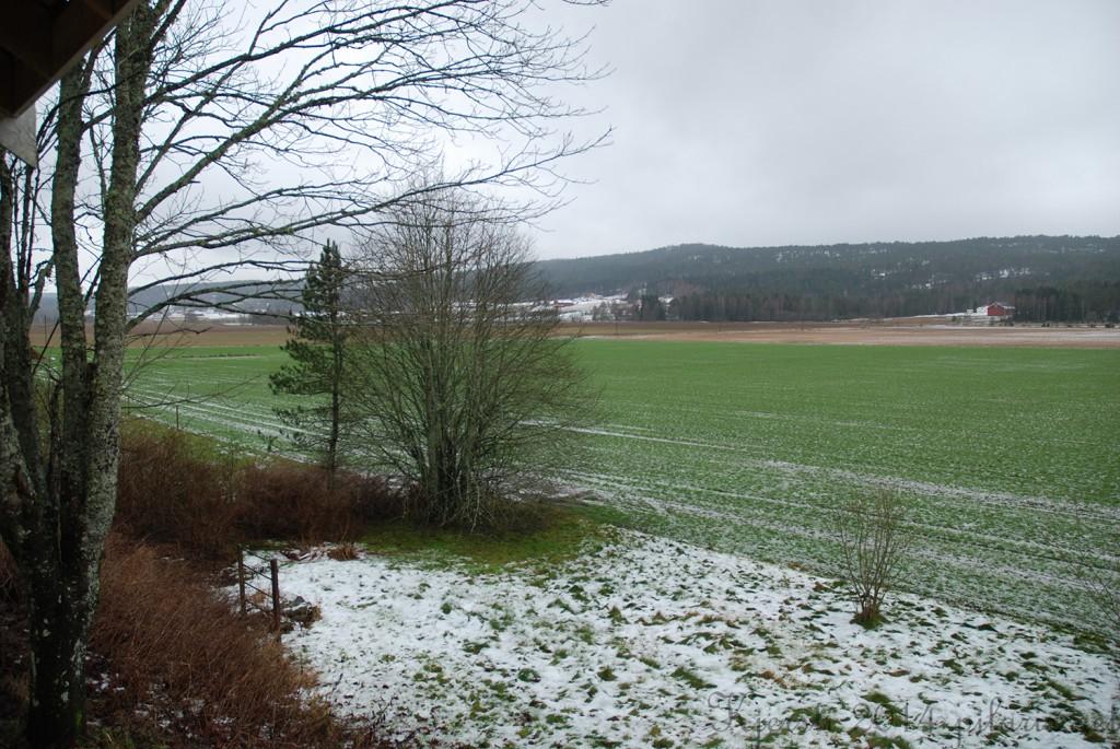 2 141214 Snø og grønt