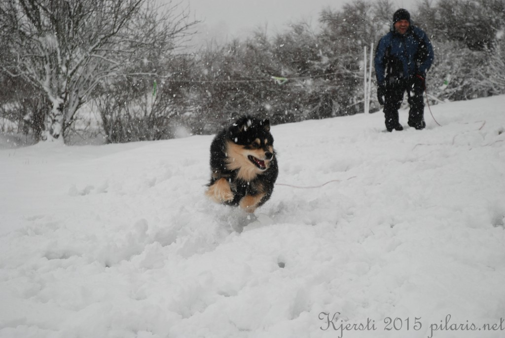1 240115 Snølek i hagen