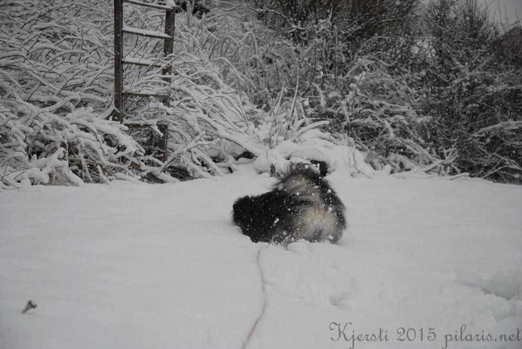 2 240115 Snølek i hagen