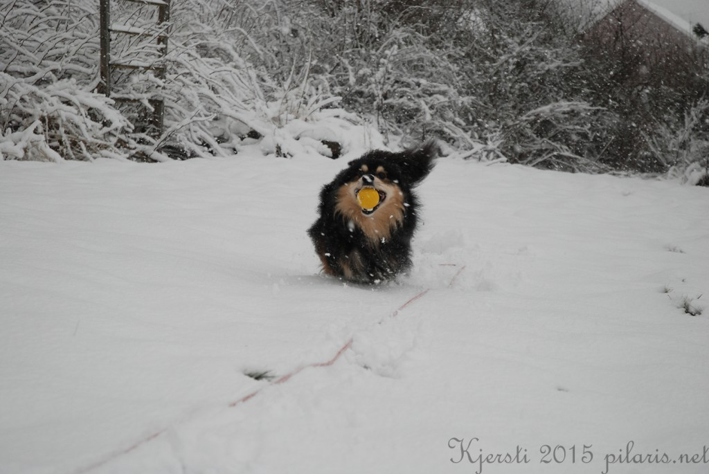 3 240115 Snølek i hagen