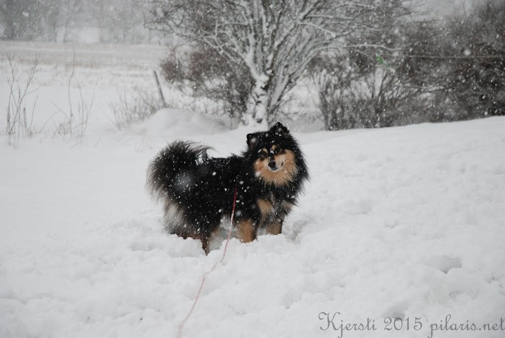 4 240115 Snølek i hagen