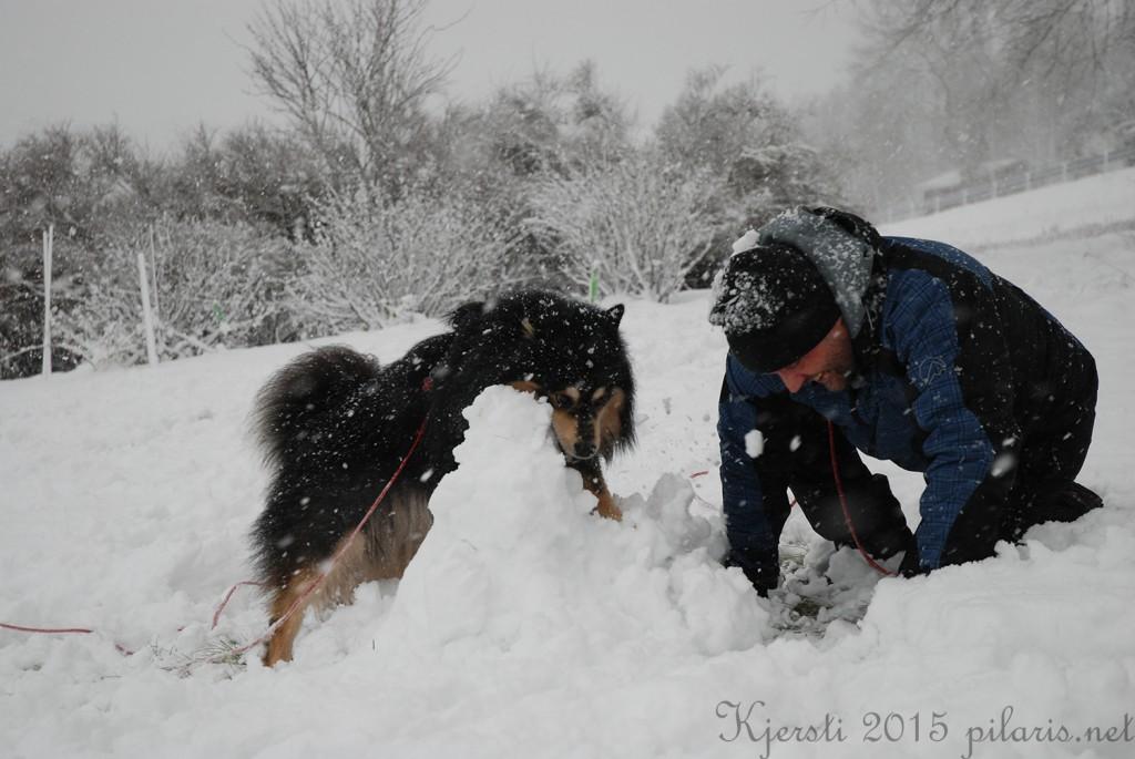 6 240115 Snølek i hagen