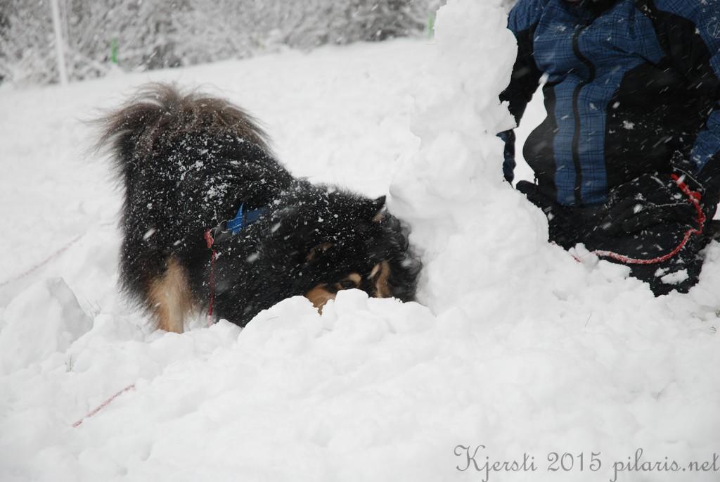 8 240115 Snølek i hagen