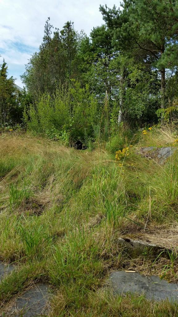 2 030815 Nairo i gresset på hytta
