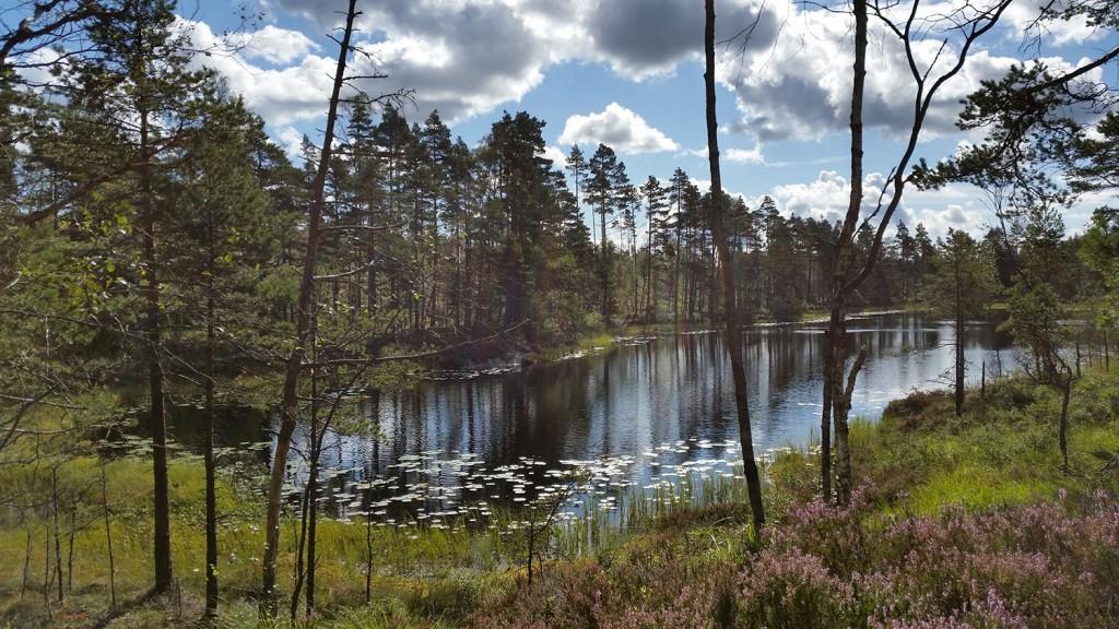5 300815 290815 Geocaching i Rakkestadfjella