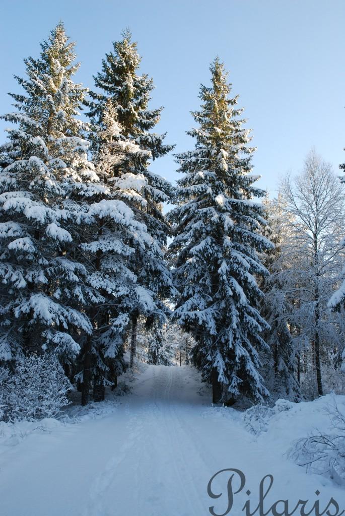2 311212 230112 Tur i snøen til Torgalsbøen