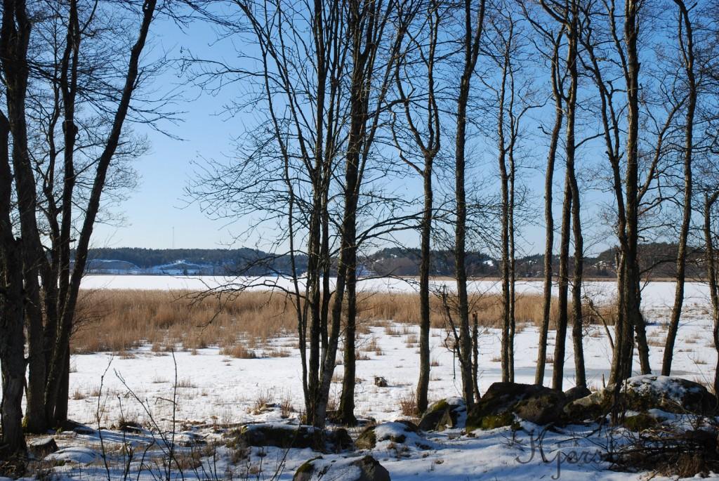 3 200213 Ved Strömsvattnet
