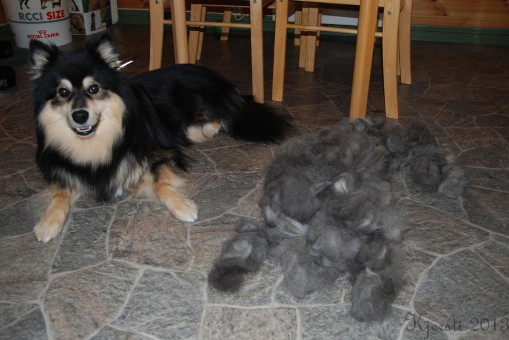 1 190713 Nairo og hans pels